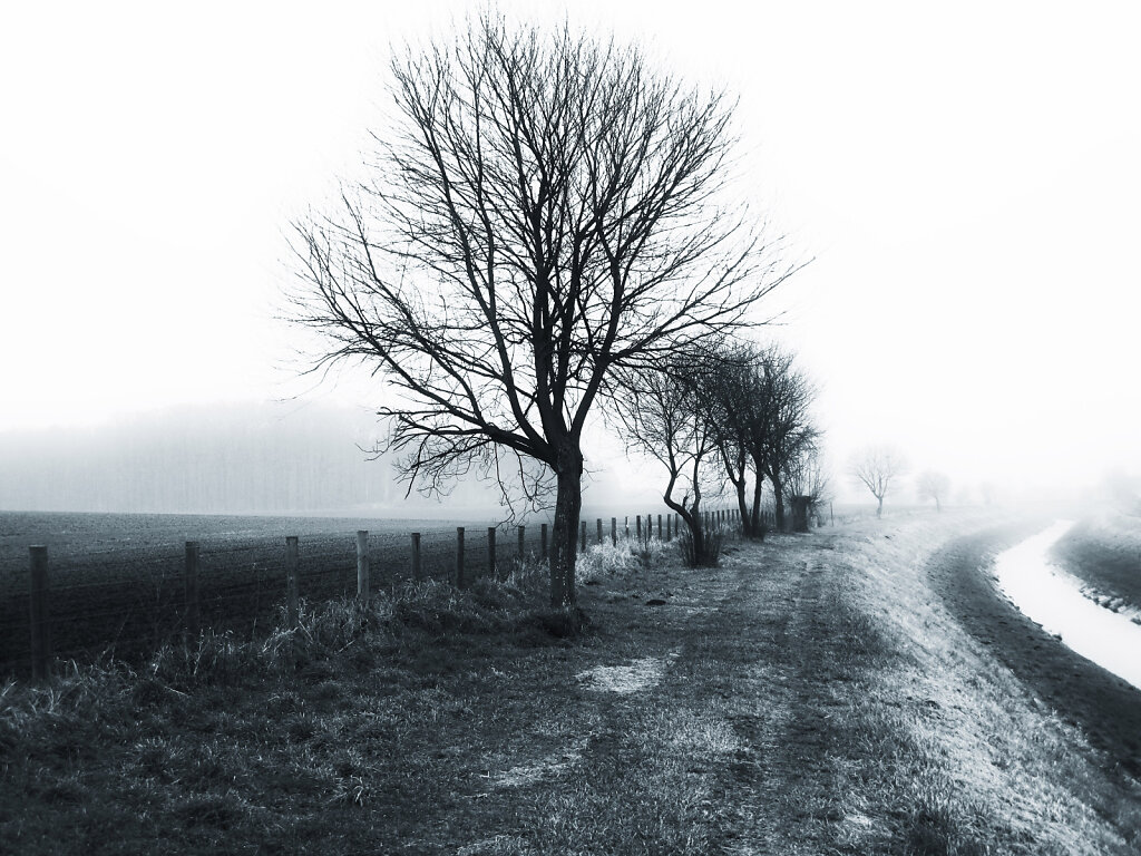 on a foggy winter morning